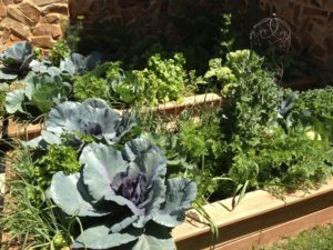 Asheville Garden Design