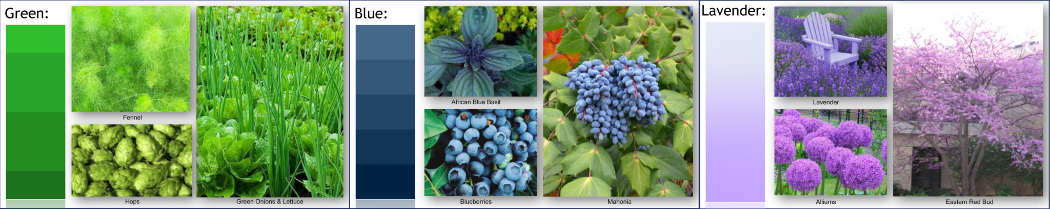 Edible color landscaping